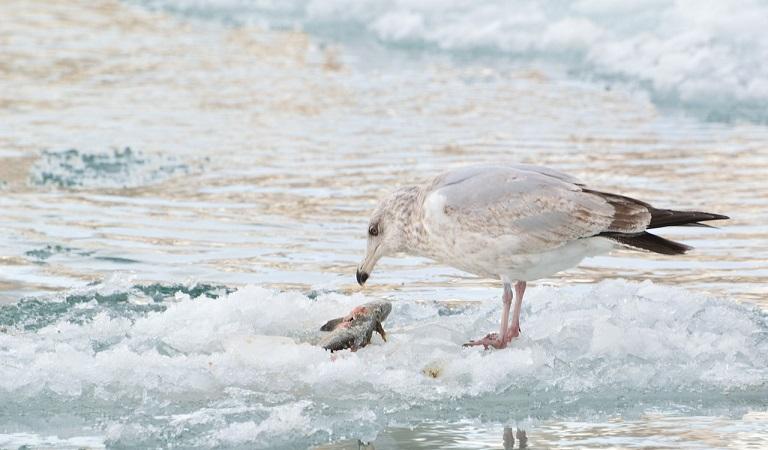 Eisfischerei - Das große Wintergarn